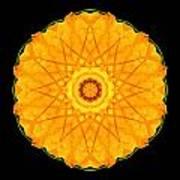 Orange Nasturtium Flower Mandala Poster by David J Bookbinder