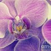 Orchid Lilac Dark Poster by Hannes Cmarits