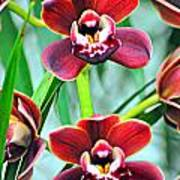 Orchid Rusty Poster by Marty Koch
