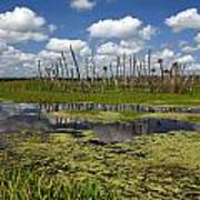 Orlando Wetlands Cloudscape 2 Poster by Mike Reid