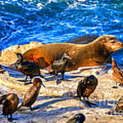 Pacific Harbor Seal Poster by Jim Carrell