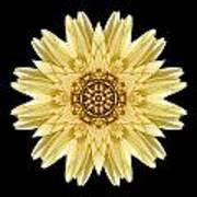 Pale Yellow Gerbera Daisy I Flower Mandala Poster by David J Bookbinder