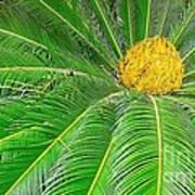 Palm Tree With Blossom Poster by Dragomir Nikolov