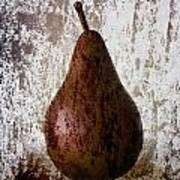 Pear On The Rocks Poster by Carol Leigh