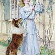 Picking Roses Poster by William Henry Margetson