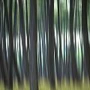 Pine Forest. Blurred Poster by Bernard Jaubert