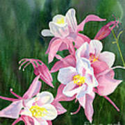 Pink Columbine Blossoms Poster by Sharon Freeman