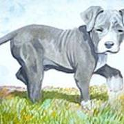 Pitbull Puppy Poster by Martial Martin