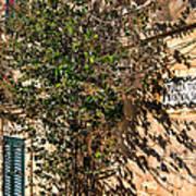 Pjazza In Mdina Poster by Alexandra Jordankova