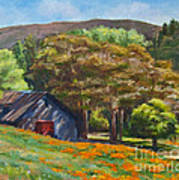 Poppies Near The Barn Poster by Laura Sapko