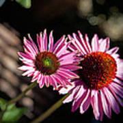 Pretty Flowers Poster by Joe Fernandez