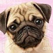 Pug Portrait Poster by Greg Cuddiford