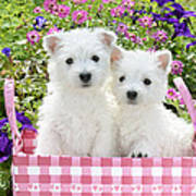 Puppies In A Pink Basket Poster by Greg Cuddiford
