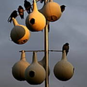 Purple Martin Twilight Poster by Karen Wiles