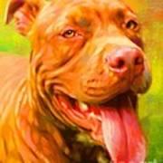 Pit Bull Portrait Poster by Iain McDonald