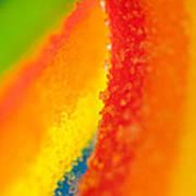 Rainbow Poster by Rebecca Skinner