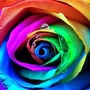 Rainbow Rose Poster by Juergen Weiss