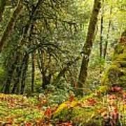 Rainforest Trunk Poster by Adam Jewell