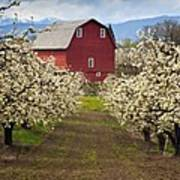 Red Barn Spring Poster by Mike  Dawson