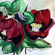 Red Helleborous Poster by Karin  Dawn Kelshall- Best