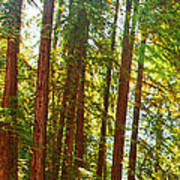 Redwood Wall Mural Panel 1 Poster by Artist and Photographer Laura Wrede
