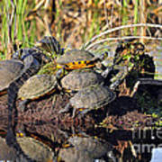Reptile Refuge Poster by Al Powell Photography USA