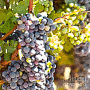 Ripe Grapes Poster by Artist and Photographer Laura Wrede