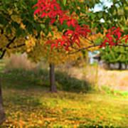 Riverbend Orchard Poster by Theresa Tahara