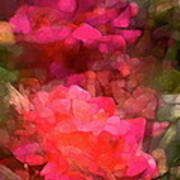 Rose 198 Poster by Pamela Cooper