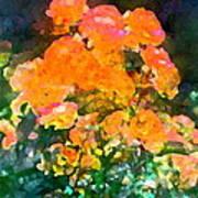 Rose 215 Poster by Pamela Cooper