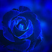 Rose In Blue Poster by Sandy Keeton