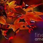 Royal Autumn A Poster by Jennifer Apffel