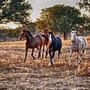 Running Horses Poster by Kristina Deane