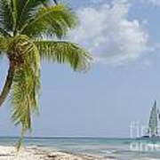 Sailboat Passing By Tropical Beach Poster by Sami Sarkis