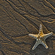 Sand Prints And Starfish  Poster by Susan Candelario