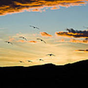 Sandhill Cranes In New Mexico Poster by William H Mullins