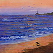 Sandpiper At Sunset Poster by C Steele