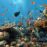 Sea Life Poster by Boon Mee