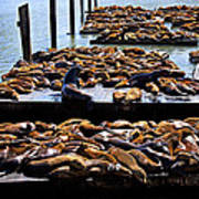 Sea Lions At Pier 39  Poster by Garry Gay