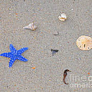 Sea Swag - Dark Blue Poster by Al Powell Photography USA