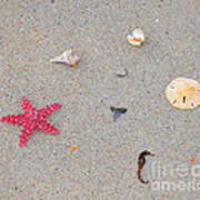 Sea Swag - Red Poster by Al Powell Photography USA
