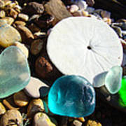 Seaglass Art Prints Rock Garden Sand Dollar Poster by Baslee Troutman