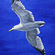 Seagull In Flight Poster by Crista Forest