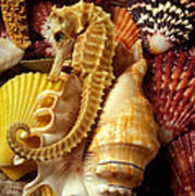 Seahorse Among Sea Shells Poster by Garry Gay
