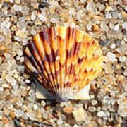 Seashell On Sandy Beach Poster by Carol Groenen