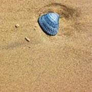 Seashell Poster by Venus