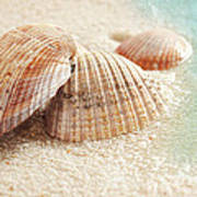 Seashells In The Wet Sand Poster by Sandra Cunningham