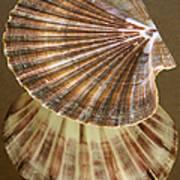 Seashells Spectacular No 54 Poster by Ben and Raisa Gertsberg