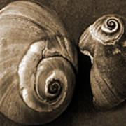 Seashells Spectacular No 6 Poster by Ben and Raisa Gertsberg