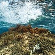 Seaweed Poster by Science Photo Library